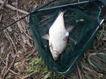 Все бях хващал риби на блесна но кело платика не бях !
