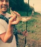 Дунавско крокодилчи  (Върнато обратно от където е дошло)